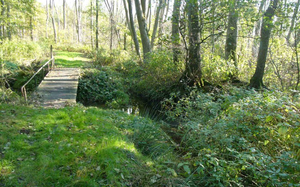 Eine Holzbrücke im Wald