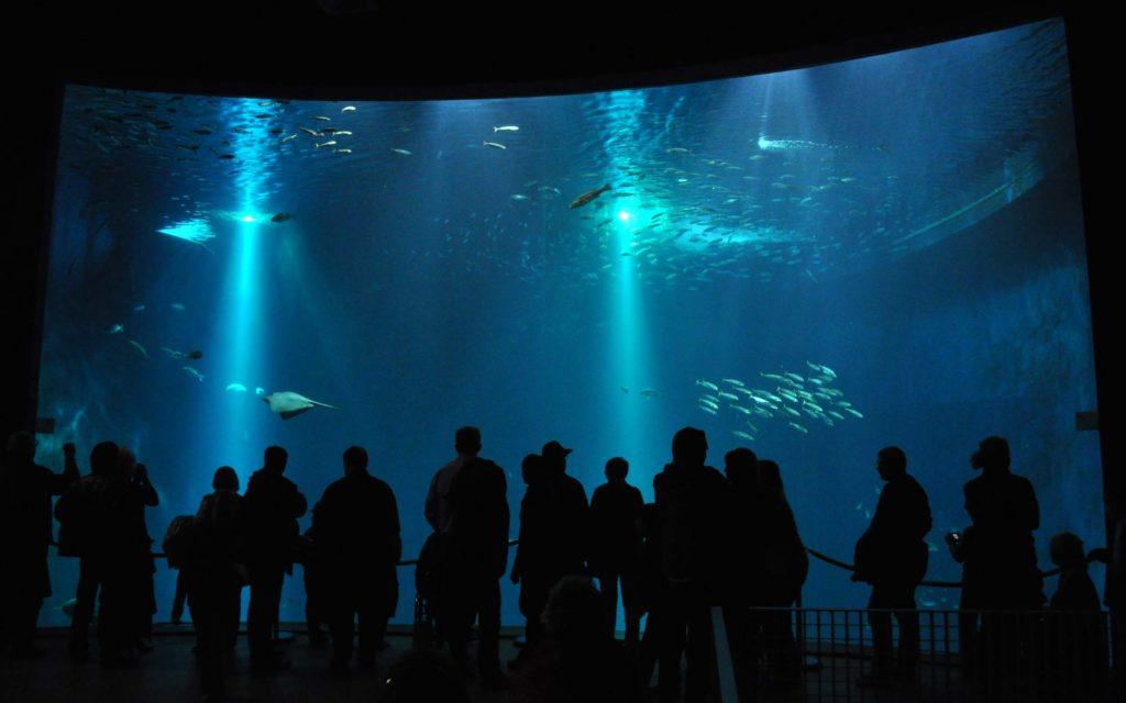 Eine Gruppe von Menschen steht vor einer großen Aquarium-Scheibe im Ozeaneum